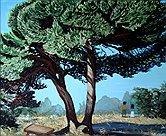 In pineta by Patrizia Testoni